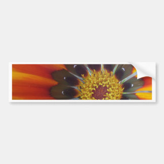 OPEN TO SUNSHINE BUMPER STICKER
