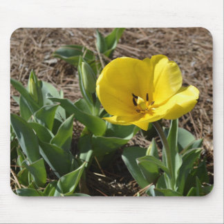 Opened Yellow Daffodil Mouse Pad