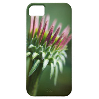 Opening Echinacea Coneflower Blossom iPhone 5 Case