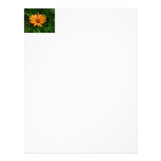 Orange African Daisy Personalized Letterhead