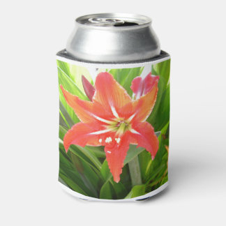 Orange Amaryllis Flower Blooms in Springtime Can Cooler