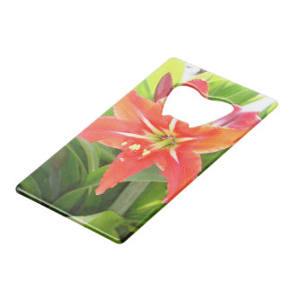 Orange Amaryllis Flower Blooms in Springtime Wallet Bottle Opener