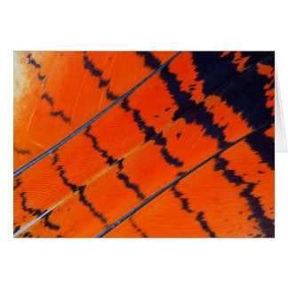 Orange And Black Cockatoo Feathers Card
