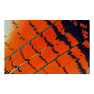 Orange And Black Cockatoo Feathers Poster