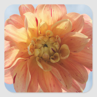 orange and red dahlia stickers