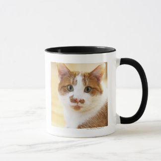 orange and white cat looking at camera mug
