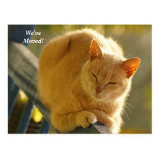 Orange and white cat  We've Moved New Address Postcard