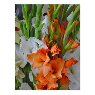 Orange and white gladiola flowers postcard
