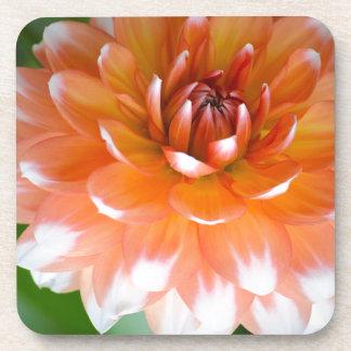 Orange and White Glory Coaster