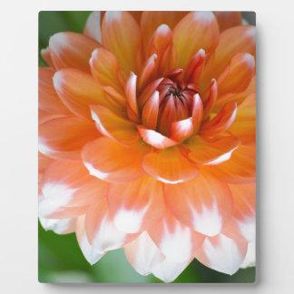 Orange and White Glory Plaque