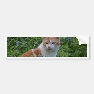 Orange and White Tabby Bumper Sticker