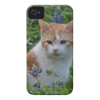 Orange and White Tabby iPhone 4 Cases