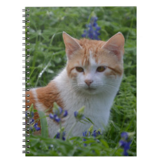 Orange and White Tabby Note Books