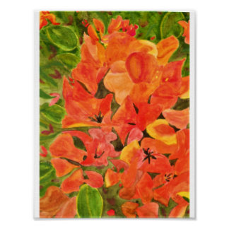 Orange and Yellow Bougainvillea Watercolor Poster