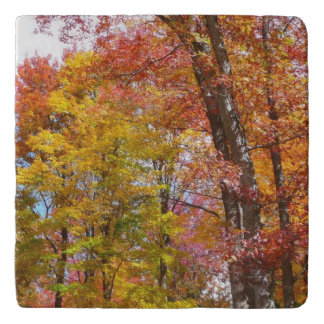Orange and Yellow Fall Trees Autumn Photography Trivet