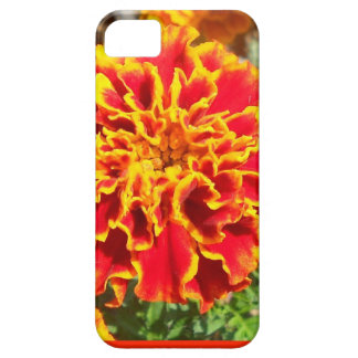 Orange and Yellow Marigold iPhone 5 Case