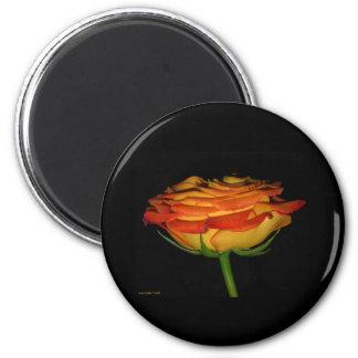 orange and yellow rose magnet