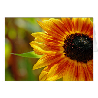 Orange and yellow sunflower blossoms greeting card