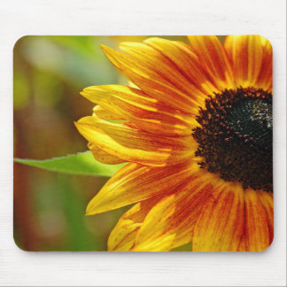 Orange and yellow sunflower blossoms mouse pad