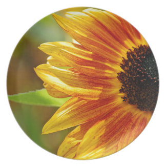 Orange and yellow sunflower blossoms party plates