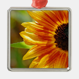 Orange and yellow sunflower blossoms Silver-Colored square ornament