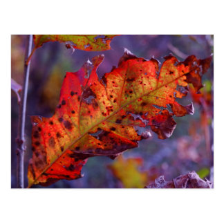 Orange Autumn Leaf Post Card