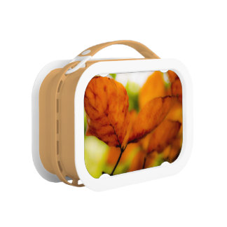 Orange autumn leaves lunch box