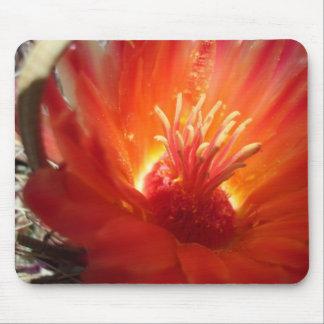 orange barrel cactus blossom mouse pad