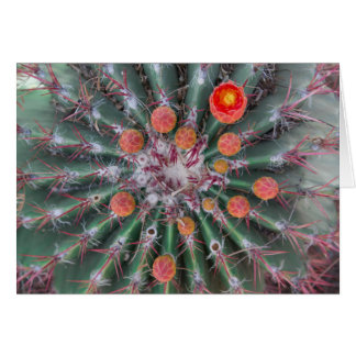 Orange Barrel Cactus Greeting Card - Blank Inside