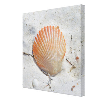 Orange Beach Shell Wrapped Canvas Print