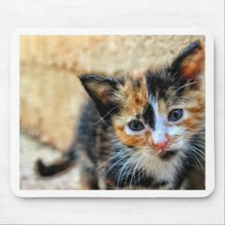 Orange Black and White Kitten Mouse Pad