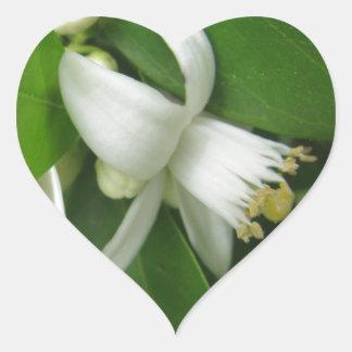Orange Blossom Heart Sticker