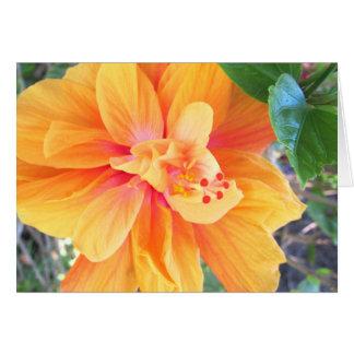 Orange Blossom Note / Greeting Card