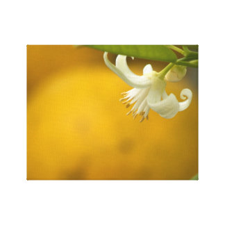 Orange Blossom on Orange Stretched Canvas Print