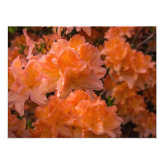 Orange Blossom Photo Prints