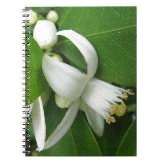 Orange Blossom Spiral Notebooks
