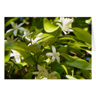 ORANGE BLOSSOMS FROM FLORIDA Greeting Card