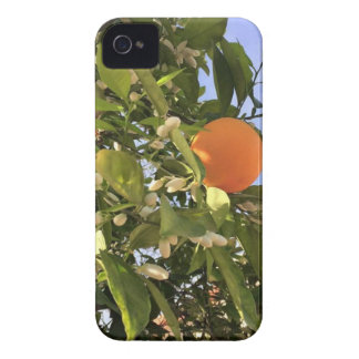 Orange blossoms iPhone 4 covers