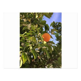 Orange blossoms postcard