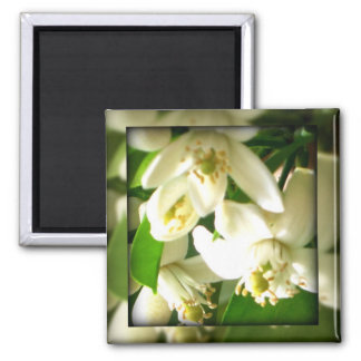 Orange blossoms square magnet