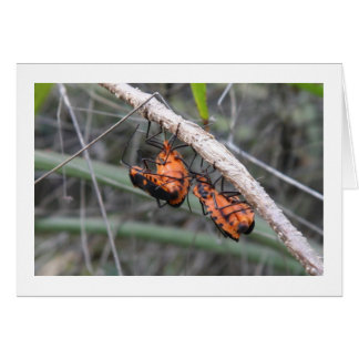Orange bugs greeting card