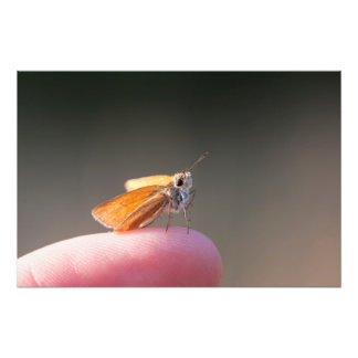 Orange butterfly on a finger photo print