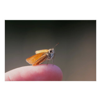 Orange butterfly on a finger posters