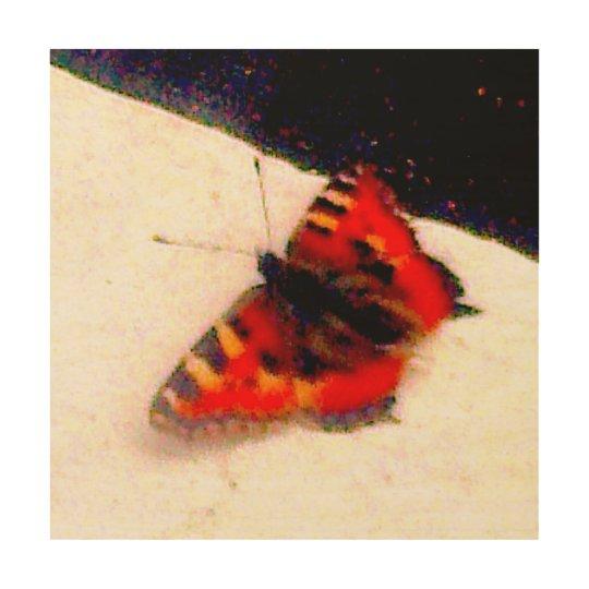 orange butterfly on wood wood print