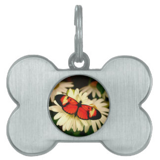 Orange Butterfly Pet Name Tags