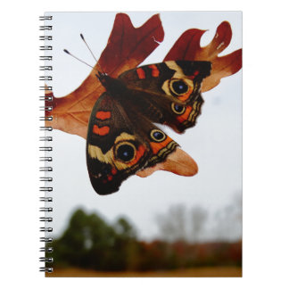 orange Butterfly  with blue spots Notebook