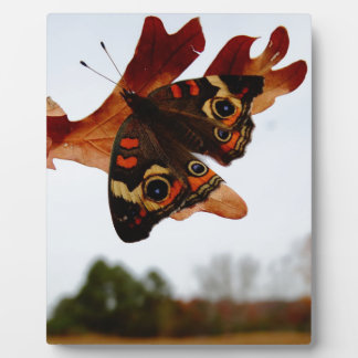 orange Butterfly  with blue spots Plaque