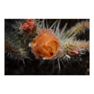 Orange Cactus Blossom Poster