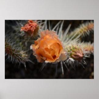 Orange Cactus Blossom Poster