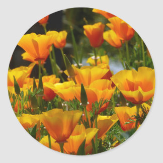 Orange California Poppies_3.1 Classic Round Sticker